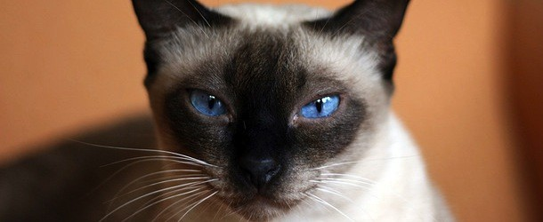 A Russian Bank Is Offering Free Cats to New Mortgage Customers