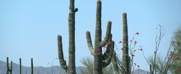 NOVA Home Loans Review: Arizona's Mortgage Lender